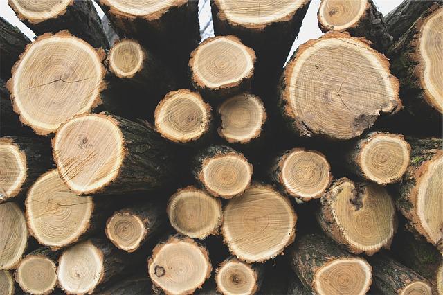 logs softwood lumber