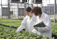 Medicago's greenhouse